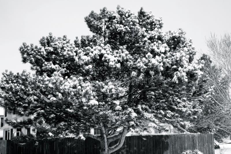 все все предметы иллюстрации элементов индивидуальные вычисляют по маштабу снежок размера к вектору вала стоковое фото