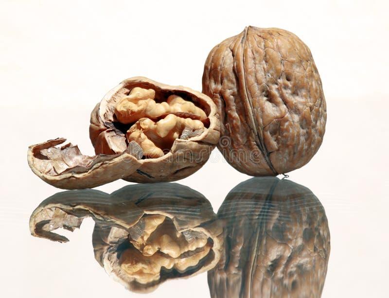 Все грецкий орех и стержень грецкого ореха стоковое изображение
