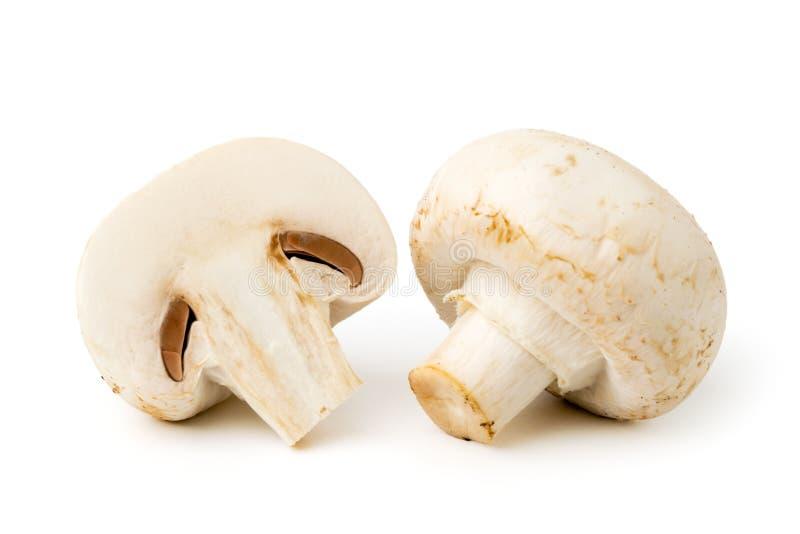 Все гриб и половина на белизне стоковые фотографии rf