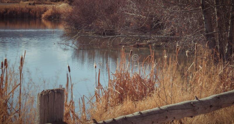 Все еще пруд утки осенью стоковое изображение