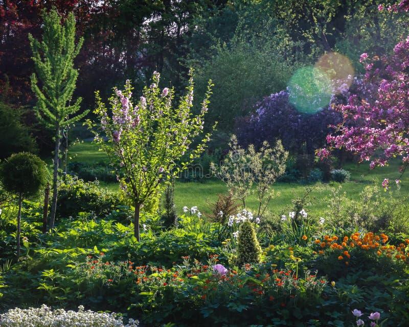 Все зелено и яблоня цветения, цветки зацветает в полостях стоковая фотография rf