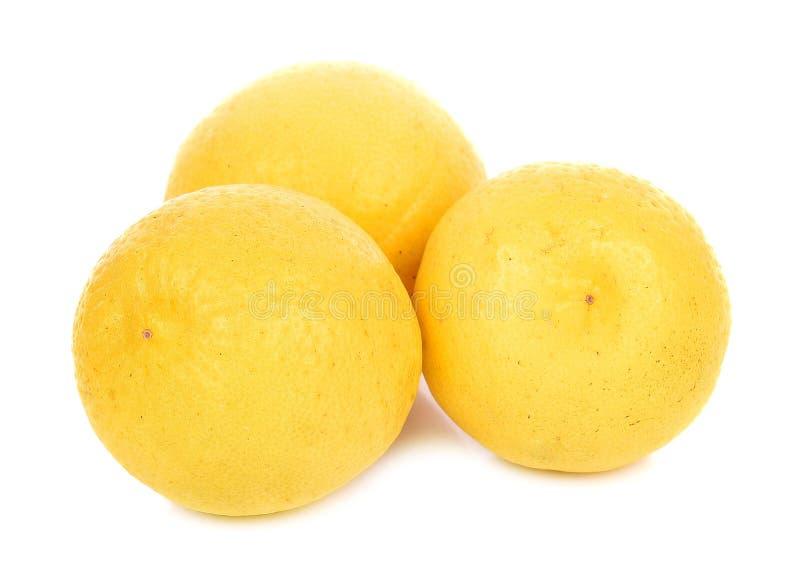 Все лимоны изолированные на белой предпосылке стоковое фото rf