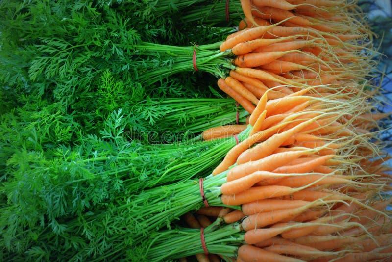 Все моркови с верхними частями стоковые фотографии rf