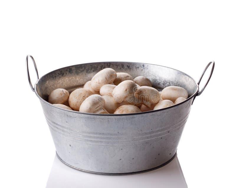 Все небольшие свежие белые грибы champignon в шаре металла изолированном на белизне стоковое изображение
