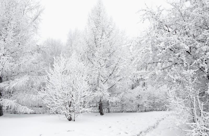 Все покрыто с снегом Фантастичные рождественские елки и праздничное настроение стоковая фотография