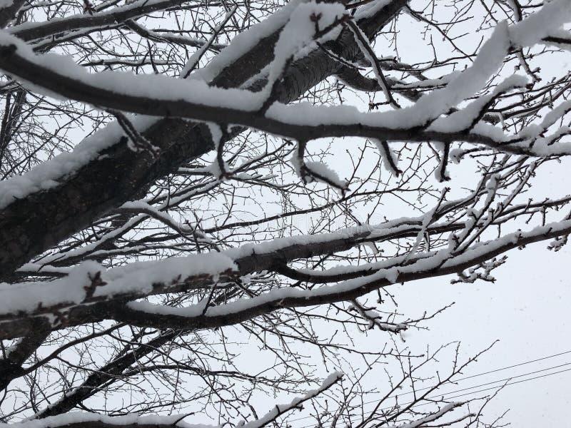 все все предметы иллюстрации элементов индивидуальные вычисляют по маштабу снежок размера к вектору вала стоковое фото rf