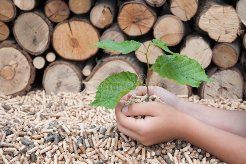 все принадлежат вид окружающей среды земли живут больше природы наш завод защищает к валам которые стоковые фото