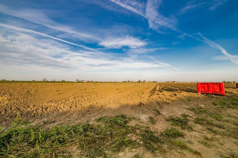 Вспаханное поле картошки после сбора стоковые фотографии rf