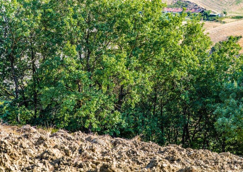 Вспаханное поле стоковая фотография rf