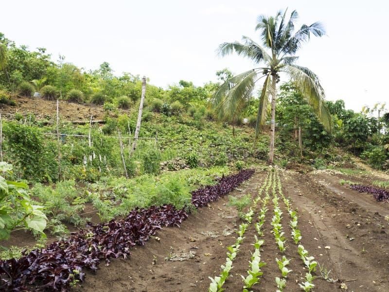 Вспаханное сельскохозяйственное угодье в Balamban, Cebu, Филиппинах стоковые изображения rf