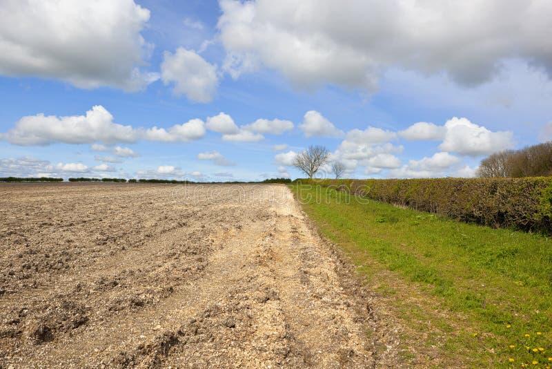 Вспаханные почва и живая изгородь стоковое изображение rf