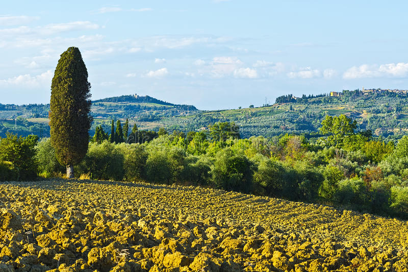 Вспаханные холмы Тосканы стоковые фотографии rf