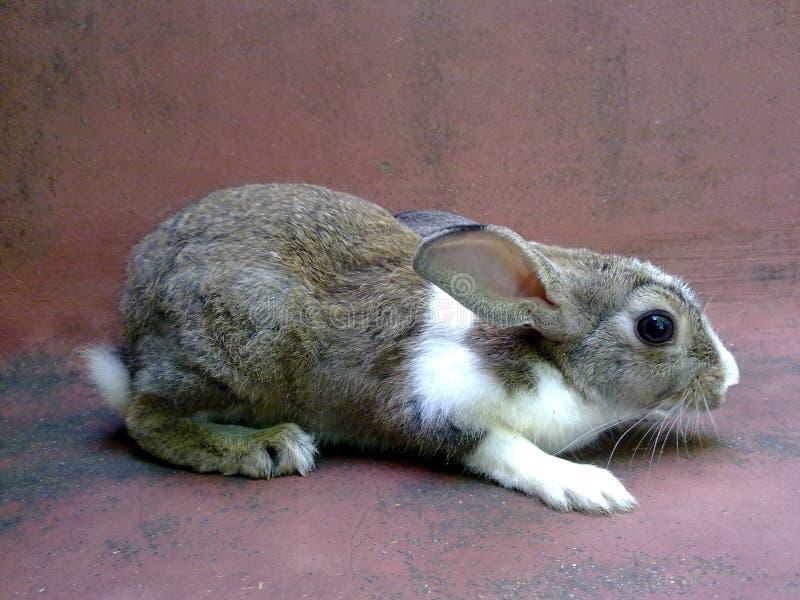 вспугнутый кролик стоковые изображения
