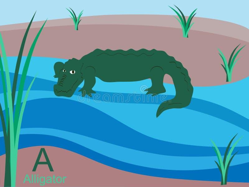вспышка карточки алфавита аллигатора животная иллюстрация вектора