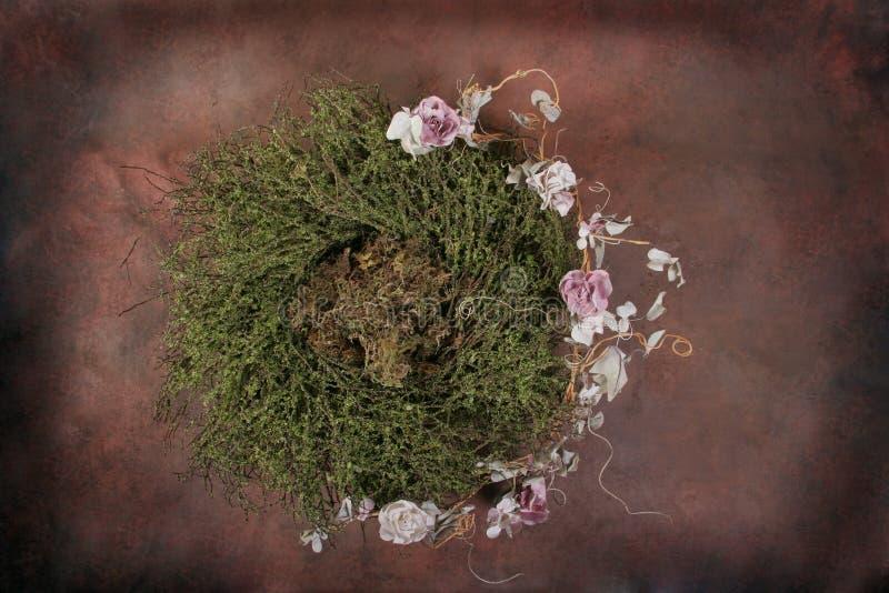 Download вставка фантазии клиента птицы младенца флористическая изолировала студию гнездя установленную Стоковое Фото - изображение насчитывающей ангеликового, клиент: 486412