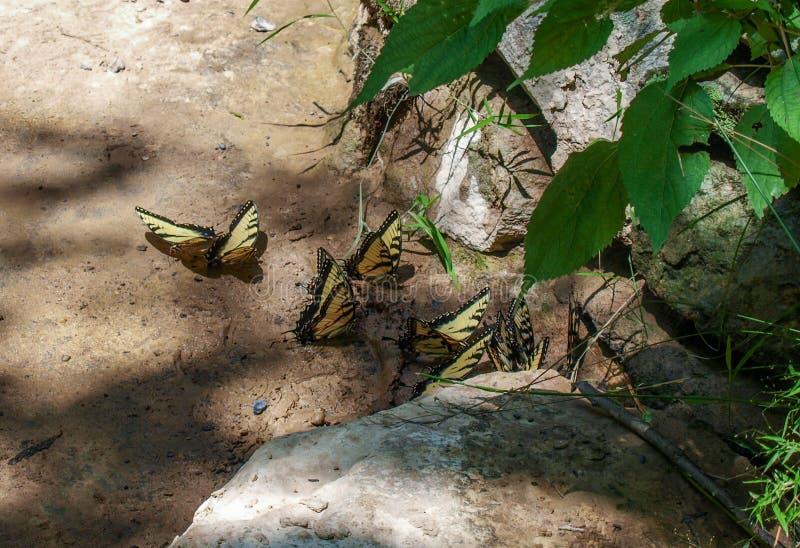 Встреча бабочек стоковое изображение