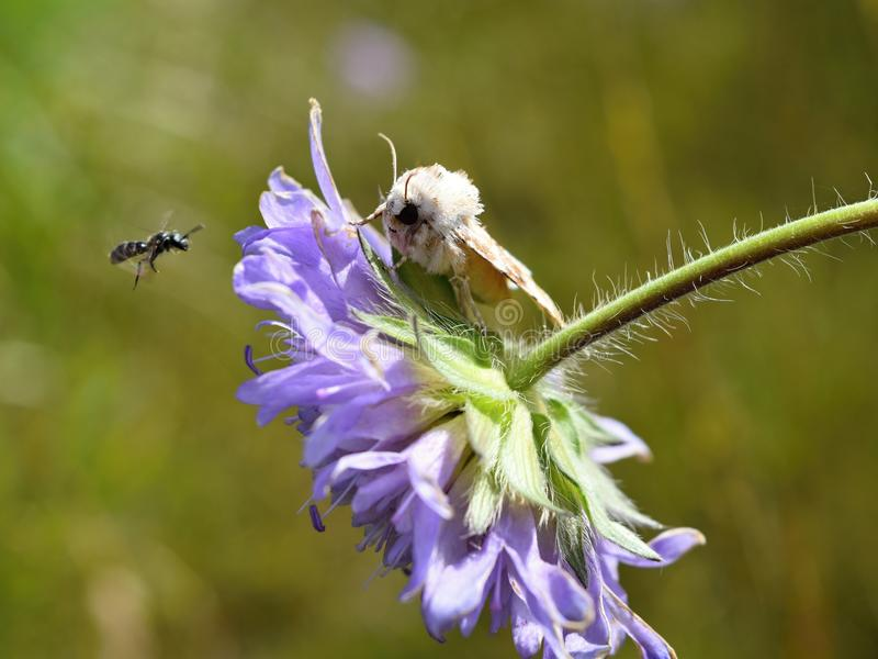 Встреча насекомых стоковые изображения