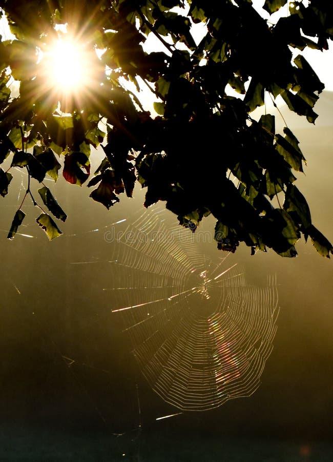 Встреча ` s солнца с сетью паука стоковые изображения rf