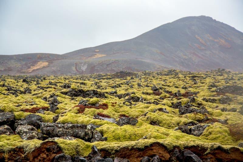 Вулканический ландшафт мха с вулканом в предпосылке стоковое изображение rf