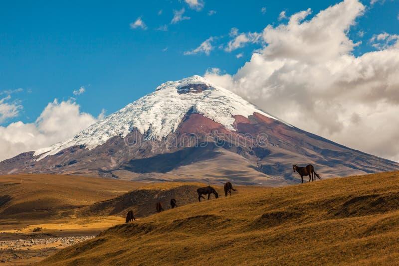 Вулкан и дикие лошади Котопакси стоковая фотография rf