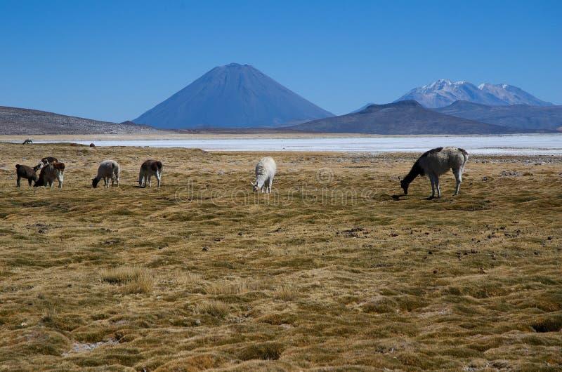 Вулкан El Misti и вулкан Nevado Chachani стоковая фотография