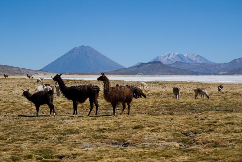 Вулкан El Misti и вулкан Nevado Chachani стоковое изображение rf