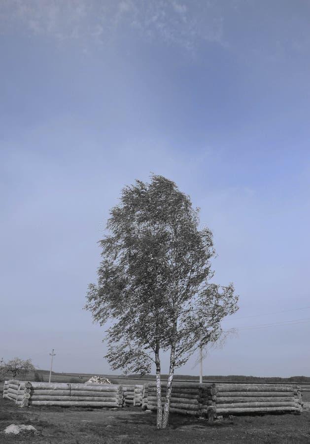 двухчленной стоковое фото rf