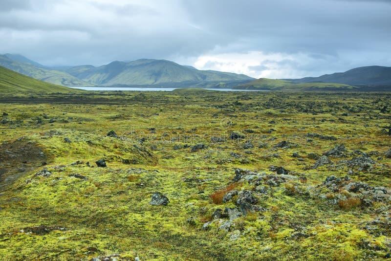 Вулканический ландшафт покрытый с мхом стоковая фотография rf