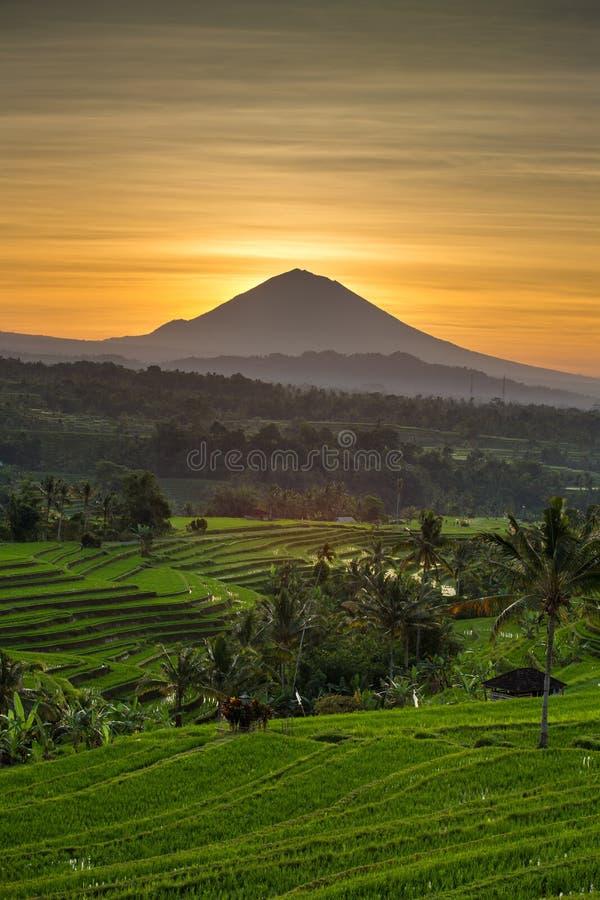 Вулкан террас и Agung риса Jatiluwih на восходе солнца стоковое фото rf
