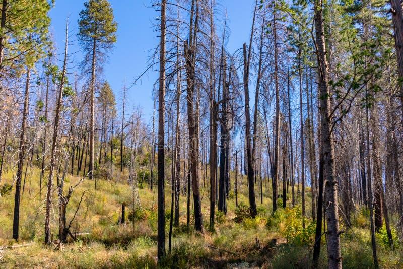Входя в национальный парк Yosemite от шоссе 120 стоковое изображение rf