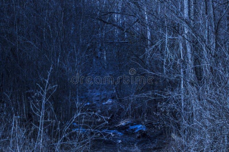 Вход к пути и никто загадочного леса ночи интересному вокруг стоковые фото