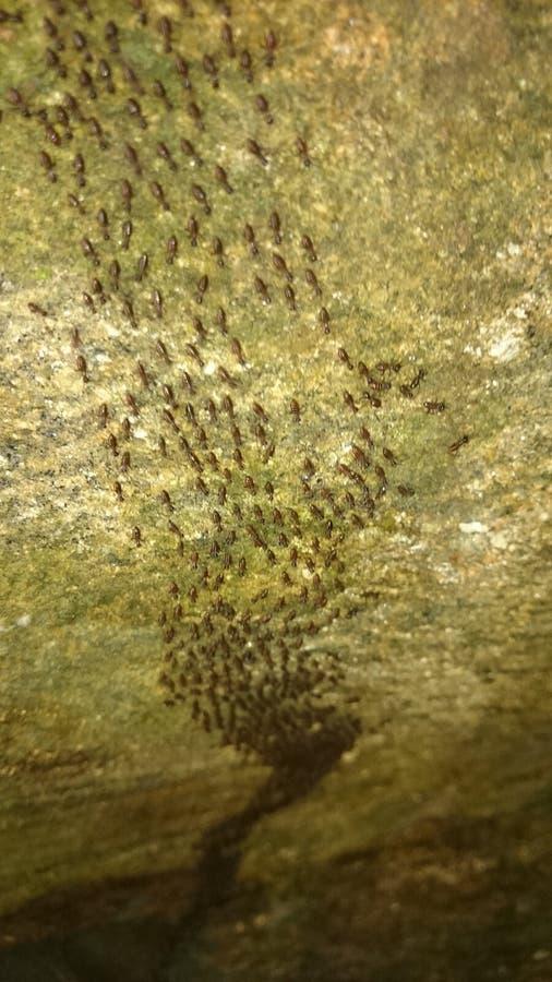 Вход леса Sinharaja - отключение муравьев стоковая фотография