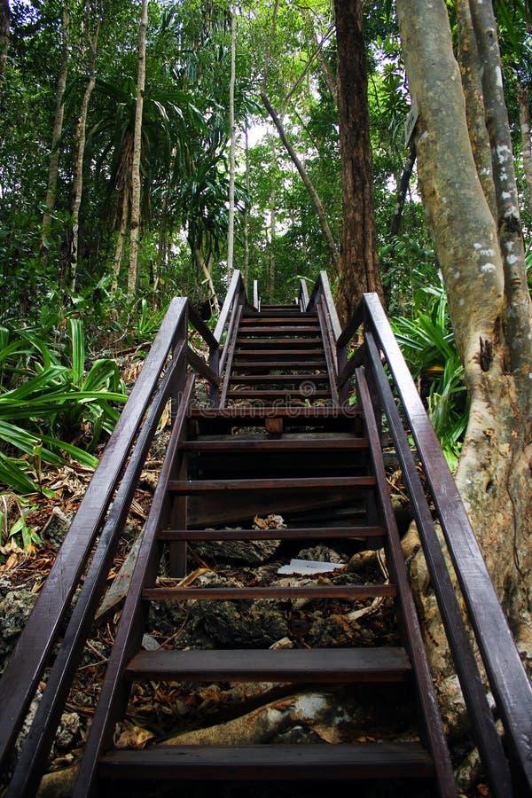 Вход к лесу стоковое изображение rf