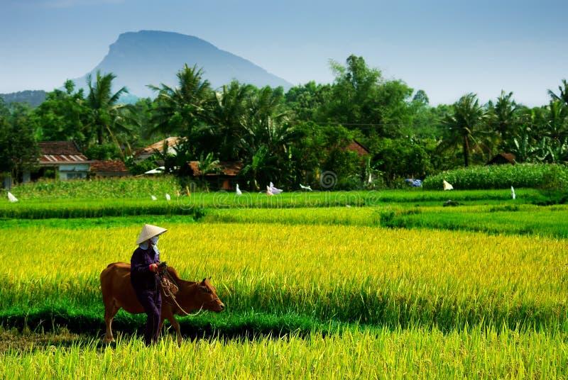 Въетнамский хуторянин стоковые изображения rf