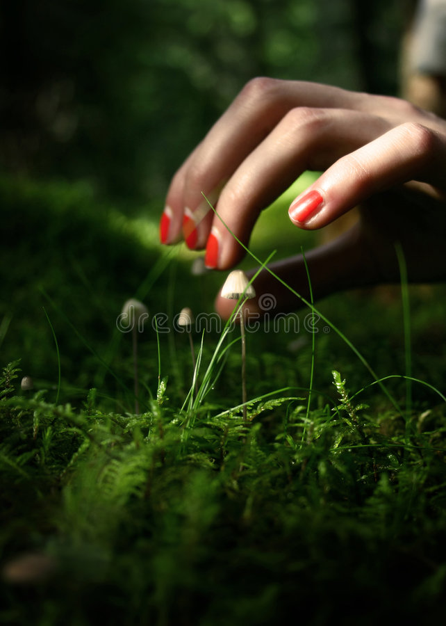 Download выбирать грибов девушки пущи Стоковое Изображение - изображение насчитывающей природа, пуща: 6862843