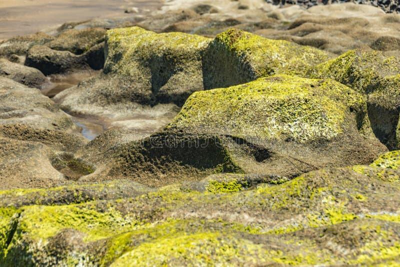 Выборочный разбивочный конец фокуса вверх Камень песка пляжа покрытый с водорослями и surraunding holies с морской водой Естестве стоковое изображение rf