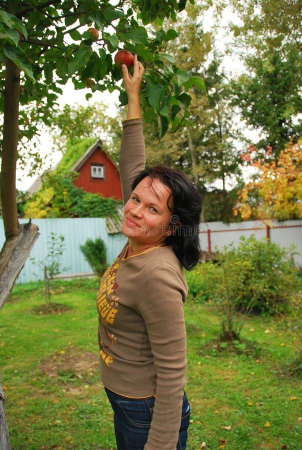 Выборы девушки зреют Яблоко стоковое фото