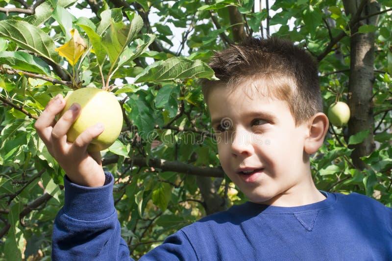 Выбор ребенка с яблока стоковая фотография