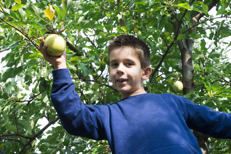 Выбор ребенка с яблока стоковое изображение rf