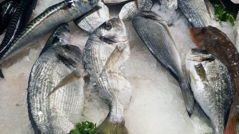 Выбор рыбного базара в Кальяри, Италии Фокус и конец-вверх дальше стоковая фотография rf