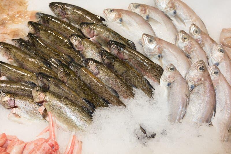 Выбор рыб на дисплее рынка на супермаркете стоковые изображения rf