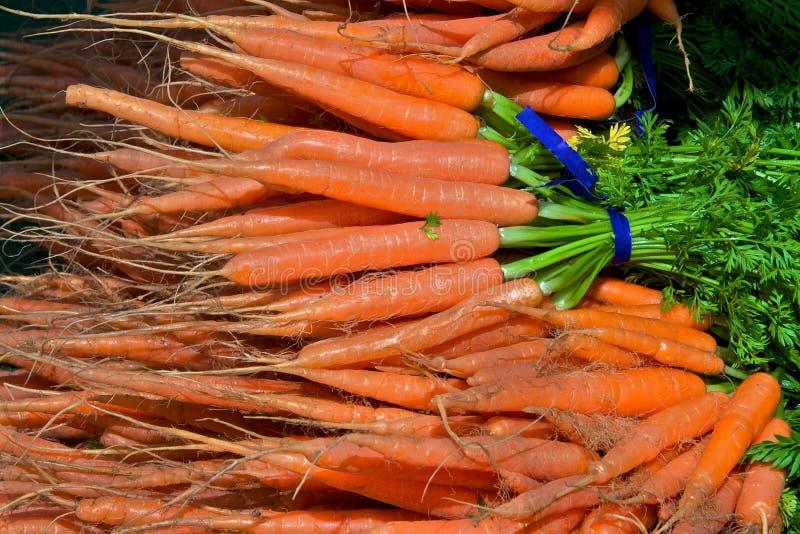 выбранная свежая морковей стоковое изображение
