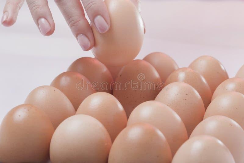 Выбранное яичко стоковые изображения rf