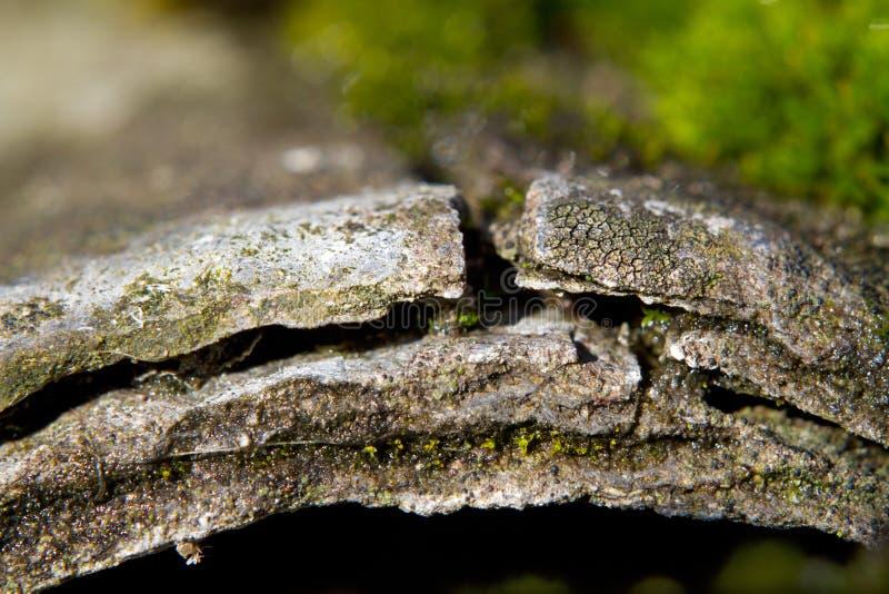 Выветренный лист цемента азбеста стоковые изображения