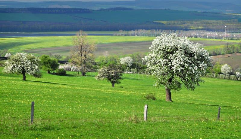 Выгон ландшафта природы стоковое изображение