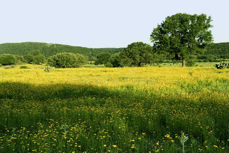 выгон texas холма страны стоковое изображение rf