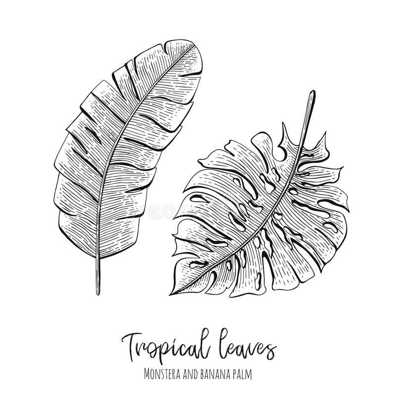 Выгравированные тропические иллюстрации с monstera листьев и ладонью банана Вручите вычерченные элементы для wedding приглашений,