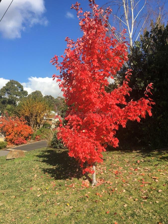 Выдающее дерево во время весны стоковая фотография rf