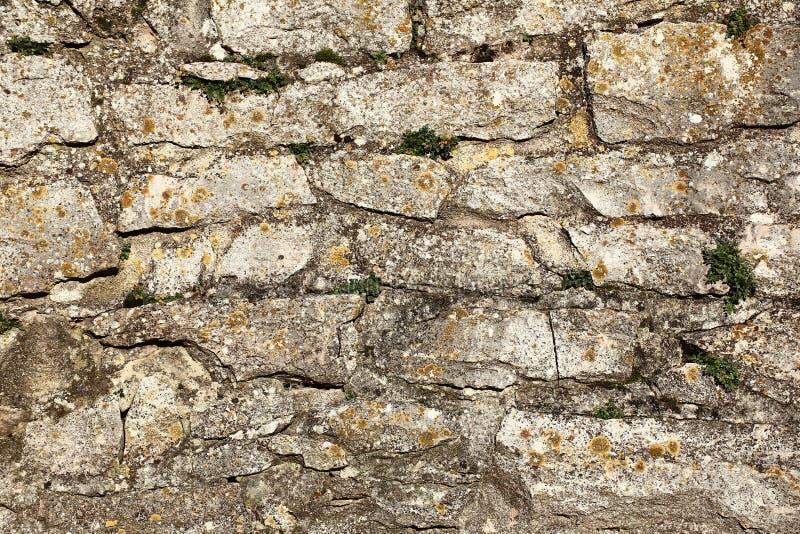 Выдержанная стена fieldstone с лишайниками и заводами стоковые фото