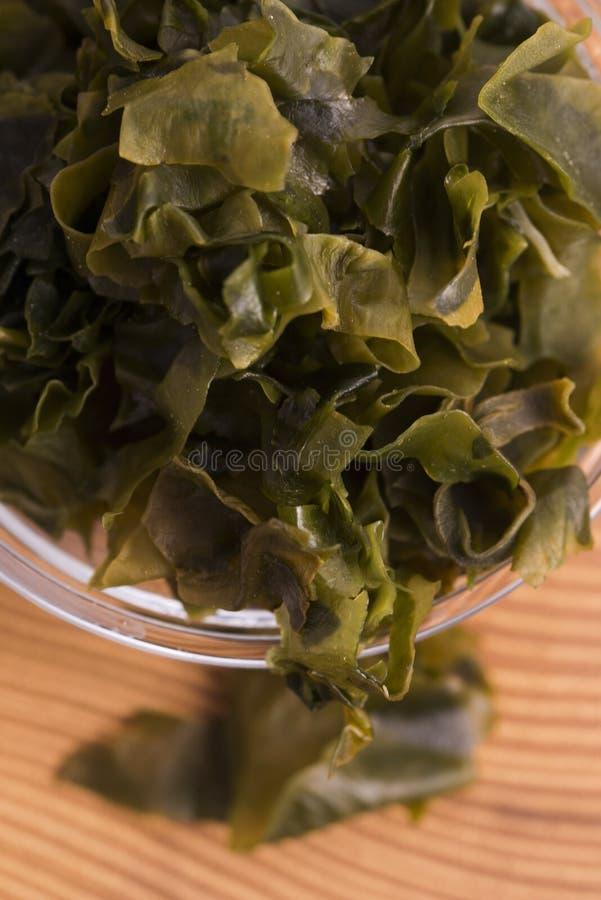 Выдержанный seaweed wakame стоковые изображения